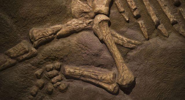 Tìm thấy xương đùi dài hai mét 140 triệu năm tuổi