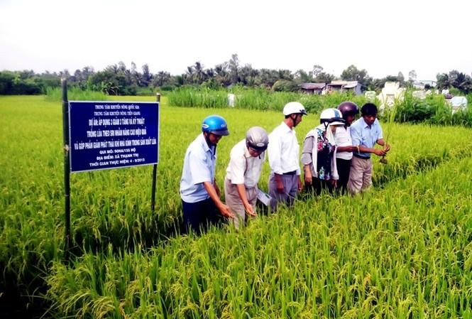 Áp dụng 3 giảm, 3 tăng và kỹ thuật trồng lúa SRI nhằm nâng cao hiệu quả và giảm phát thải khí nhà kính trong sản xuất lúa