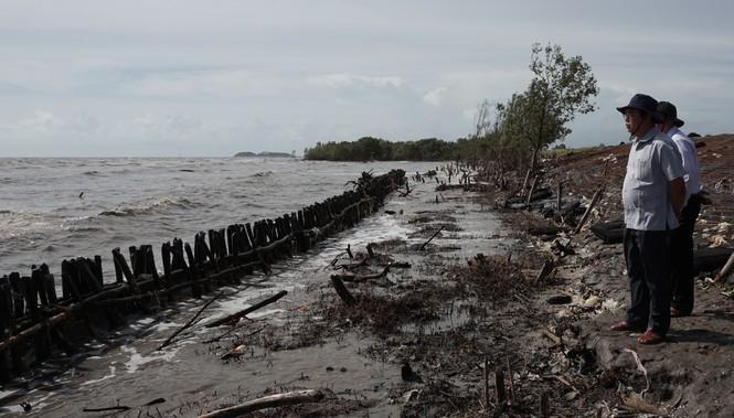 Tuyến đê biển Tây Cà Mau từ Kiên Giang đến Mũi Cà Mau bị sạt lở nghiêm trọng trong mùa mưa bão, gió tây- nam hoạt động mạnh