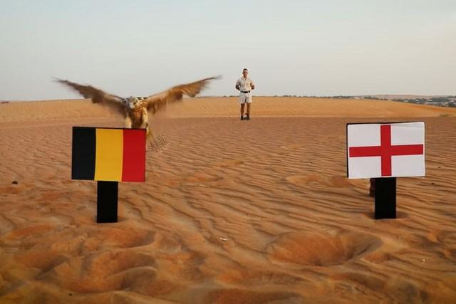 """""""Tiên tri"""" chim cắt dự đoán Bỉ sẽ hạ gục Anh."""