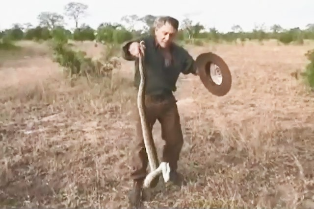 Người đàn ông dùng tay không bắt trăn vô cùng điêu luyện