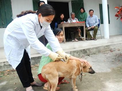 Bộ Y tế ra khuyến cáo sử dụng vắc xin kịp thời để phòng bệnh dại, căn bệnh thường tăng cao vào mùa nắng nóng từ tháng 5 đến tháng 8 hàng năm. Ảnh minh họa: Internet