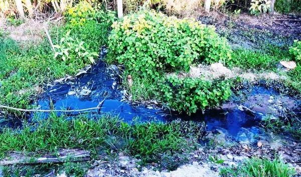 Nhà máy tinh bột sắn TT-Huế (xã Phong An, huyện Phong Điền, tỉnh TT-Huế) đã có hành vi vi phạm các quy định về xả nước thải
