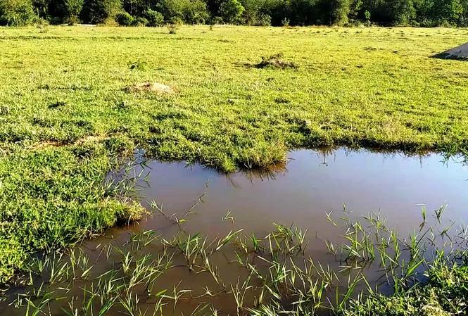 Vùng sình lầy thuộc Nghĩa trang nhân dân Chân Mây, tỉnh Thừa Thiên Huế