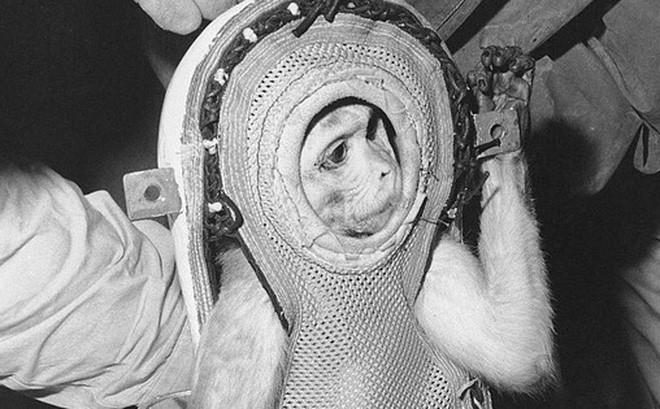 Kỳ thú chuyện khỉ Sam trở về từ vũ trụ làm loạn khu trục hạm của Mỹ