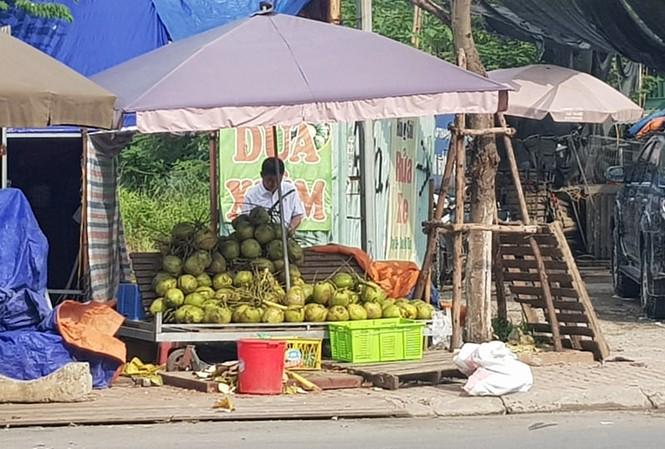 Lán bán dừa xiêm gần chợ Nam Trung Yên (Cầu Giấy) lãi tiền triệu mỗi ngày. Ảnh: N.M