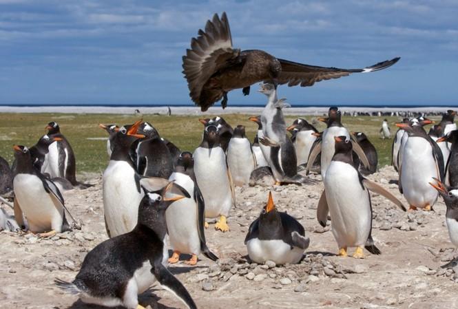 Những hình ảnh này được chụp tại đầm Volunteer ở đảo Falklands (ngoài khơi nước Anh) bởi nhiếp ảnh gia Derek Pettersson.