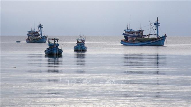 Tàu cá neo đậu ở huyện đảo Phú Quốc, tỉnh Kiên Giang. Ảnh: TTXVN.