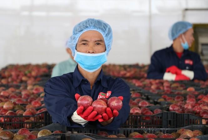 Thúc đẩy công nghiệp chế biến là một trong những khâu để nâng cao giá trị nông sản Việt Nam trong thời gian tới.