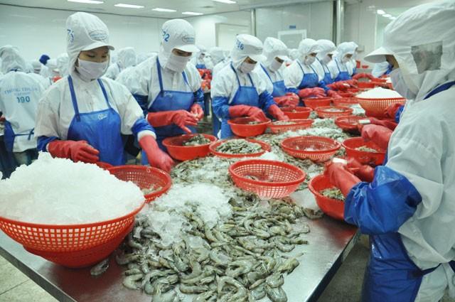 Theo Bộ NN&PTNT, EVFTA có hiệu lực đã mang đến triển vọng cho xuất khẩu tôm Việt Nam sang thị trường EU trong những tháng cuối năm 2020.