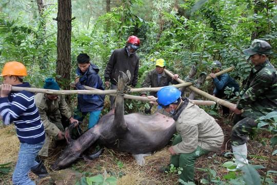 Ban chỉ đạo Trung ương về Phòng chống thiên tai đề nghị Thừa Thiên-Huế tổ chức đoàn công tác đốc thúc công tác phòng chống rét cho vật nuôi, cây trồng ở huyện A Lưới.