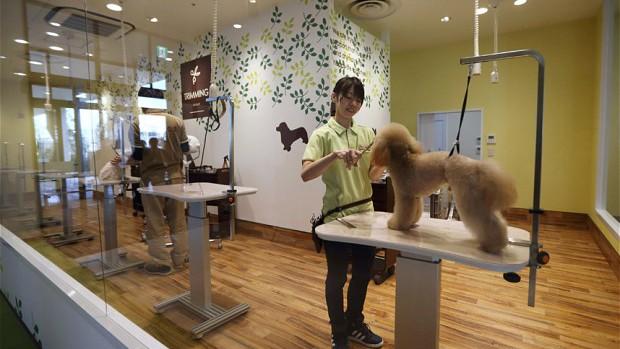 Một trung tâm chăm sóc chó của Aeonpet