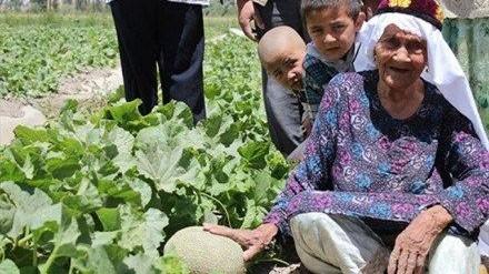 Cụ Ali Mihan trên cánh đồng dưa ưới của mình