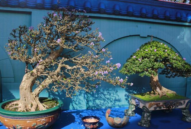Chiêm ngưỡng các tác phẩm bonsai và đá cảnh nghệ thuật quốc tế hội tụ ở TPHCM