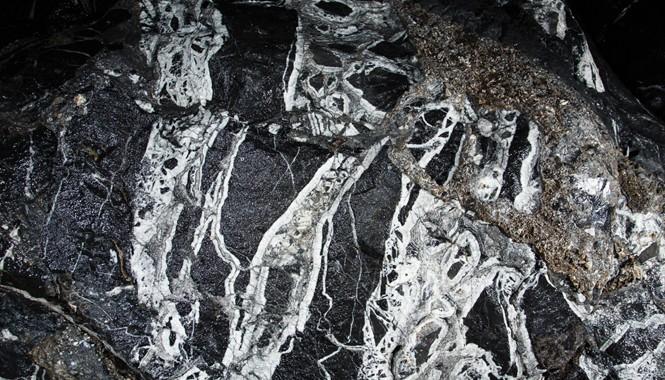 Một dạng hóa thạch bên trong hang Sơn Đoòng. Ảnh: Ryan Deboodt.