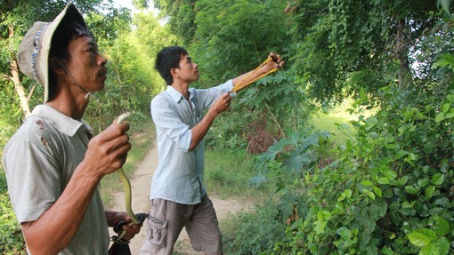 Anh Cường (trái) và anh Thiết đang truy lùng một con rắn lải.