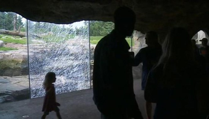 Tấm kính rạn nứt sau khi con gấu dùng đá đập vào cửa kính nhiều lần. Ảnh: Huffington Post.
