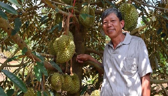 Ông Cường bên gốc sầu riêng trĩu quả tại Đồng Nai. Ảnh:Nông nghiệp Việt Nam.