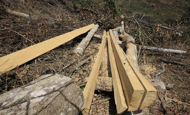 Một vụ phá rừng ở huyện Lâm Hà, Lâm Đồng.
