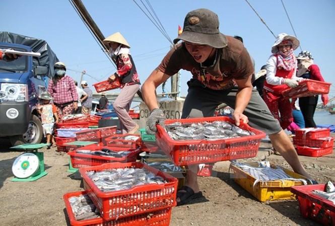 Hội Nghề cá Việt Nam đề nghị cần phát tờ rơi cho người tiêu dùng nhận biết cá tầng đáy.
