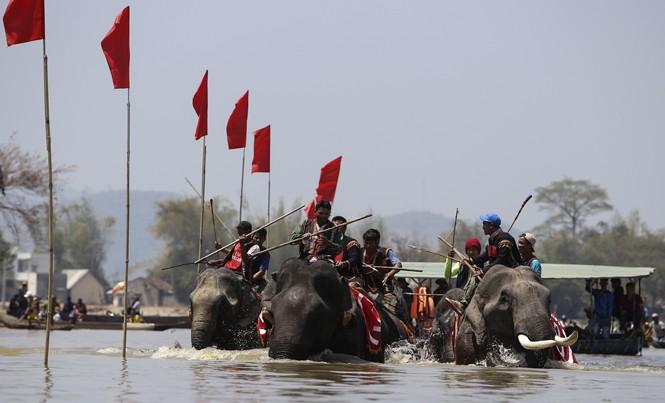 Các chú voi tranh tài dưới nước.