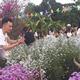 Teen Đà Nẵng, bạn đã check-in khu vườn
