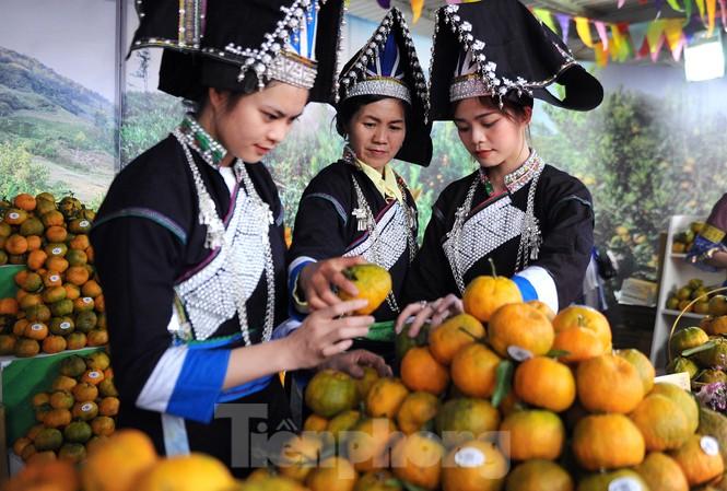 Tuần lễ quýt ngọt biên giới Mường Khương tại Hà Nội