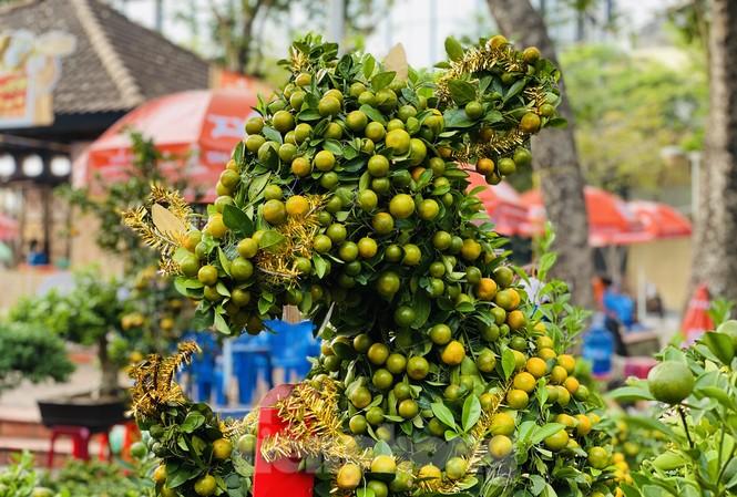 Quất cảnh hình chuột khan hiếm ở chợ hoa Sài Gòn