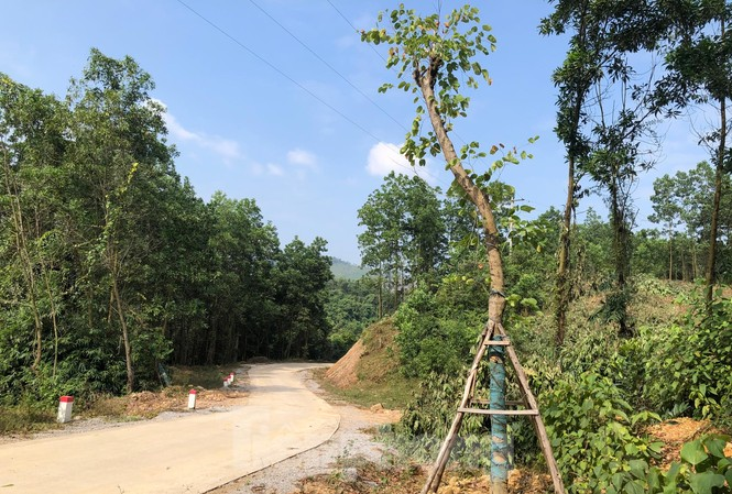 Vụ hàng cây tiền tỷ 'tự mọc': Mất công nhổ, chủ nhân mới đứng ra xin