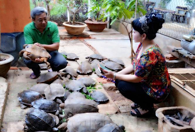 Ông Cường (trái) nuôi rùa đã 20 năm