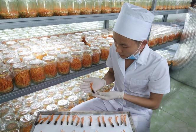 Ong Thế Dũng trong khu nuôi cấy đông trùng hạ thảo của mình ảnh: N.T