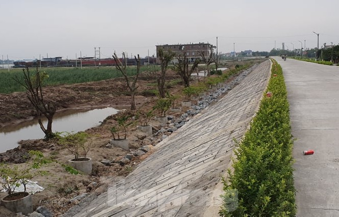 Hàng cây lâu năm trồng xâm phạm đê sông Đáy (địa phận tỉnh Ninh Bình).