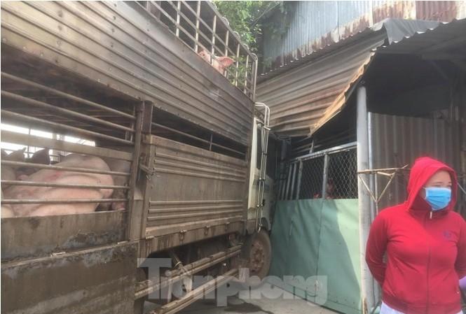Xe chở 50 con heo tông vào nhà dân khiến quốc lộ 13 kẹt cứng 2km