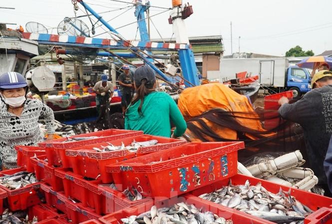 Những mẻ cá cuối cùng cập cảng tại TT-Huế trước khi bão số 5 đi vào đất liền.