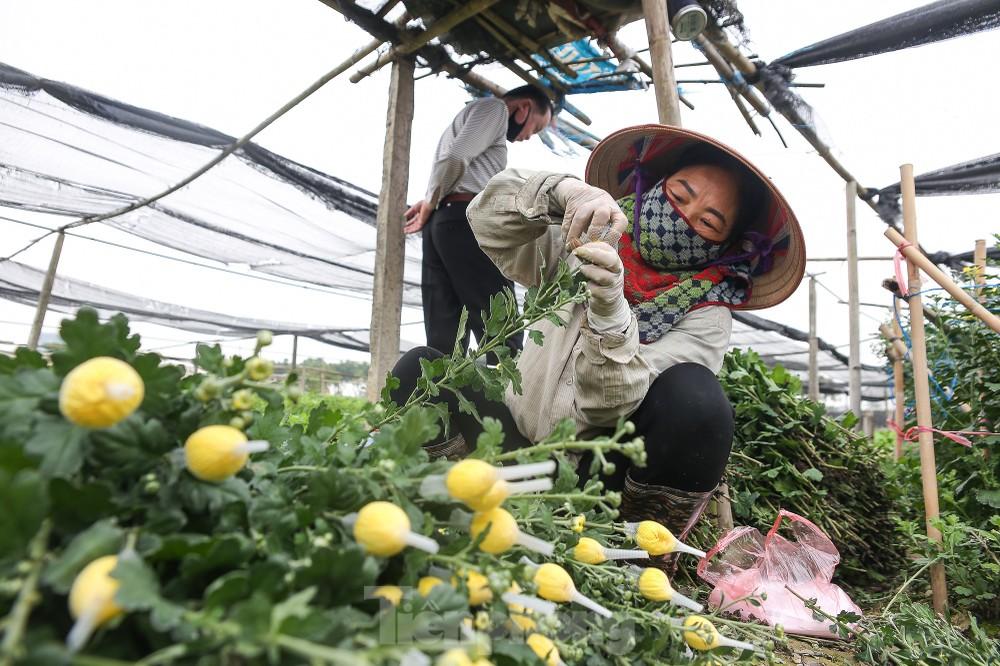 Rằm tháng Giêng, làng Tây Tựu lo sốt vó vì hoa ế chỏng chơ