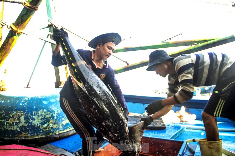 Ăn Tết trên biển, ngư dân Bình Định 'ấm' cả mùa