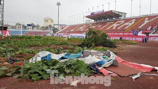 Hải Phòng dọn sạch khu trồng rau trong sân vận động Lạch Tray - mega 655