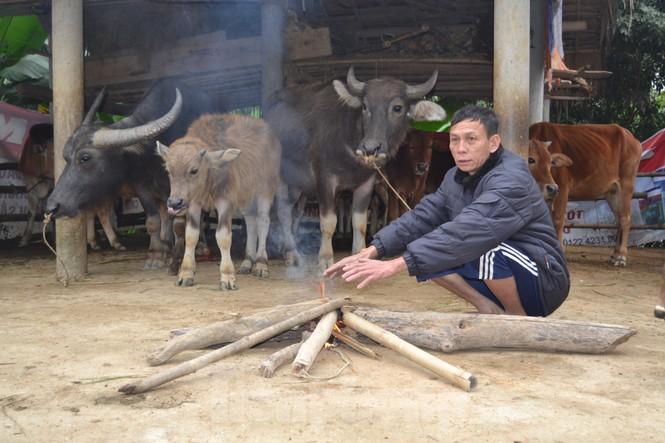 Người dân miền núi đốt lửa sưởi ấm cho trâu, bò những ngày rét đậm, rét hại - ảnh 2