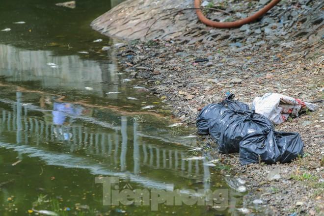 Cá chết hàng loạt tại hồ Trúc Bạch - ảnh 4