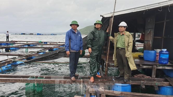 Khánh Hoà khẩn trương đưa lồng bè ngư dân vào bờ để tránh bão 12 - ảnh 4