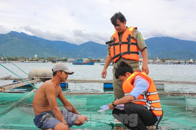 Khánh Hoà khẩn trương đưa lồng bè ngư dân vào bờ để tránh bão 12 - ảnh 3