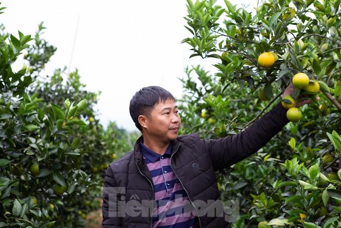 Đặc sắc hội chợ cam, bưởi ở Bắc Giang - ảnh 1