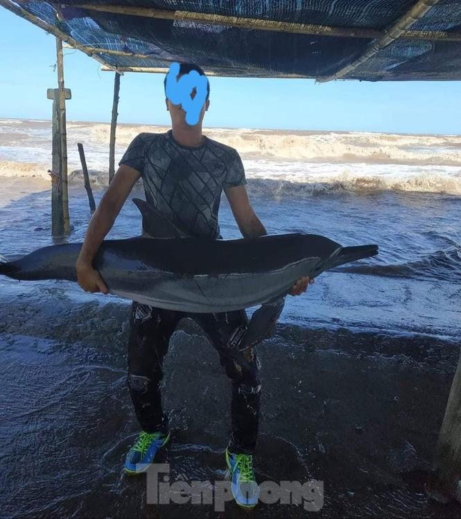 Cá heo bị gây thương tích khi dạt vào bãi biển Quất Lâm - ảnh 2
