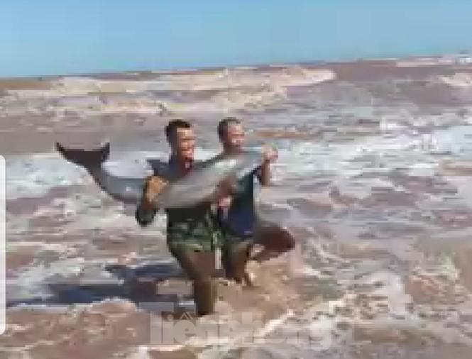 Cá heo bị gây thương tích khi dạt vào bãi biển Quất Lâm - ảnh 1