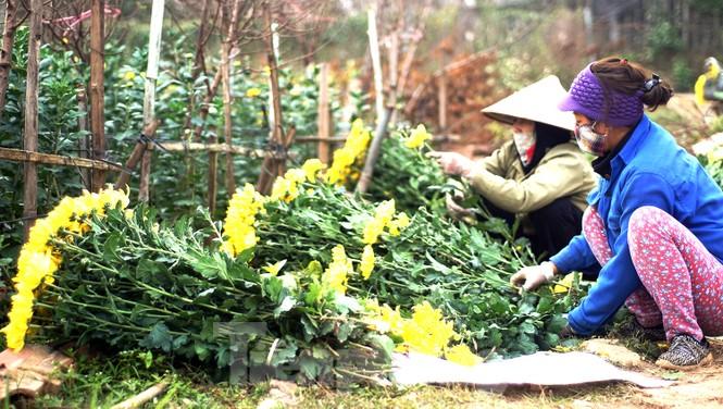 Cúc vàng Nhật Tân 7.000 đồng một bông hối hả xuống phố ngày mồng Một cuối năm - ảnh 2