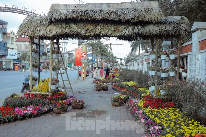 Rực rỡ sắc hoa trên phố đi bộ thành phố Vinh ngày áp tết - ảnh 10