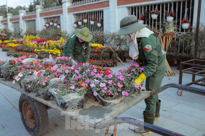 Rực rỡ sắc hoa trên phố đi bộ thành phố Vinh ngày áp tết - ảnh 1