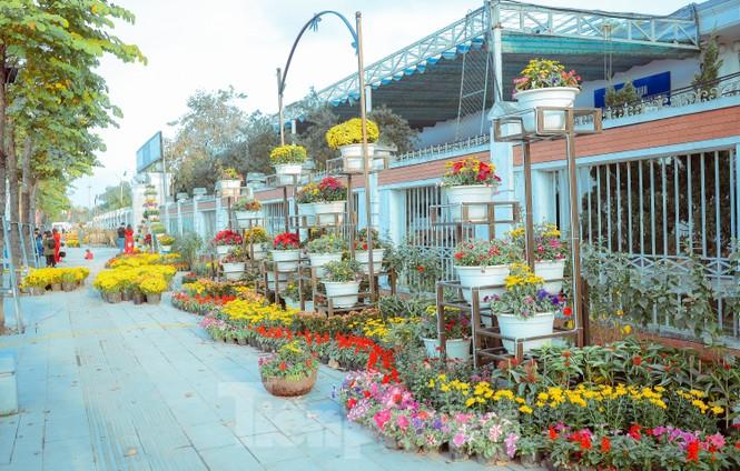 Rực rỡ sắc hoa trên phố đi bộ thành phố Vinh ngày áp tết - ảnh 5