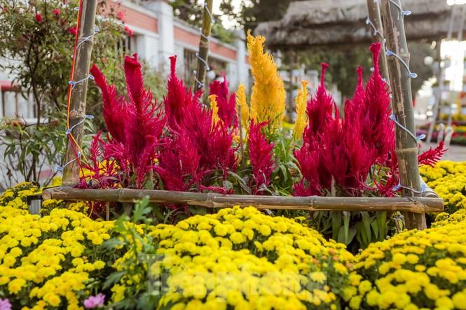 Rực rỡ sắc hoa trên phố đi bộ thành phố Vinh ngày áp tết - ảnh 6