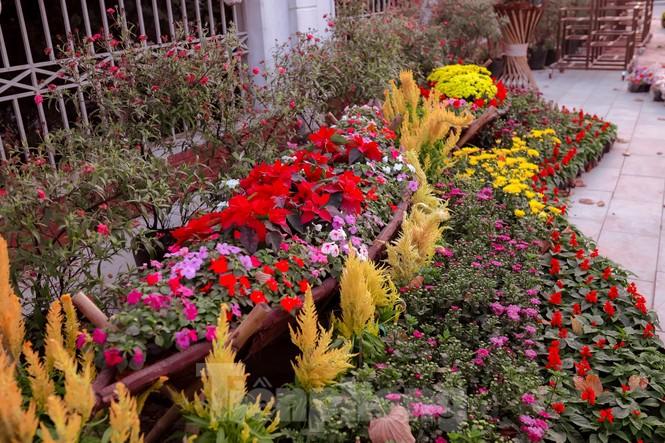 Rực rỡ sắc hoa trên phố đi bộ thành phố Vinh ngày áp tết - ảnh 7